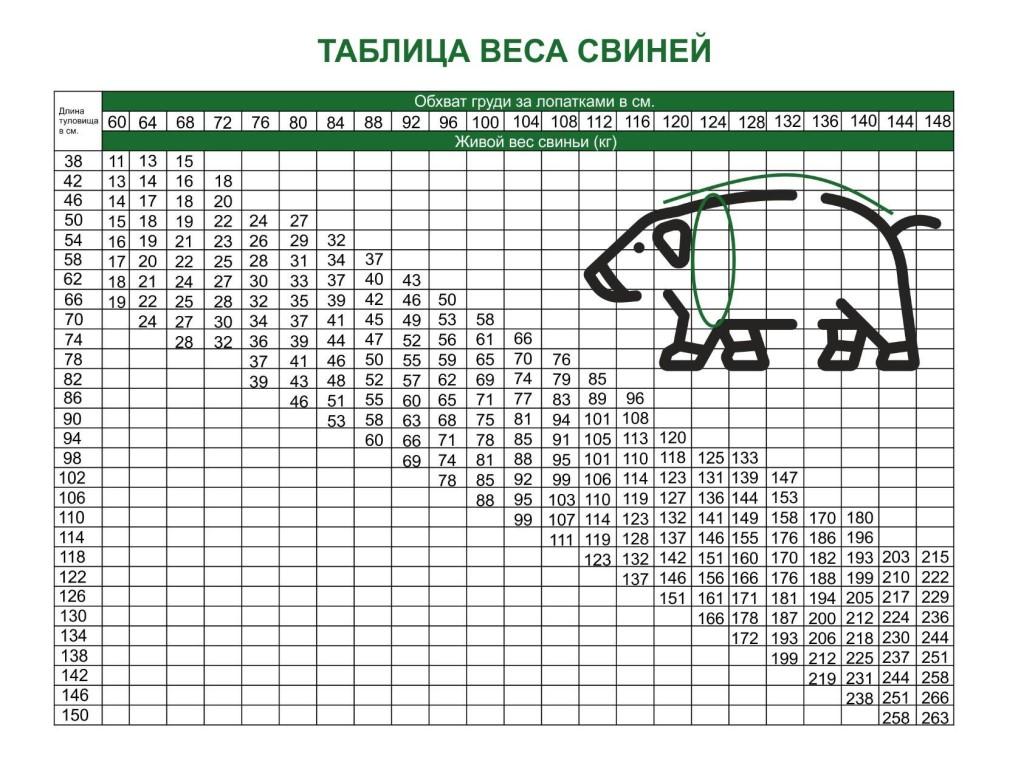 Вес свиньи - таблица измерения веса поросенка по месяцам в домашних условиях
