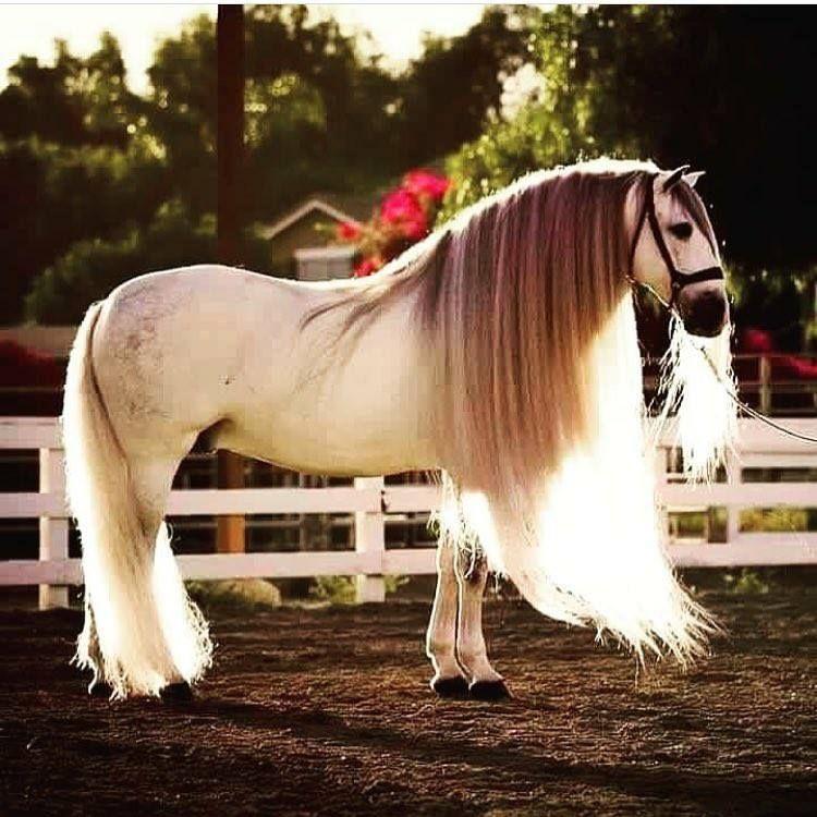 Описание самых красивых лошадей и коней в мире: фото и видео