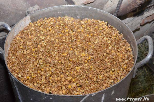 Пророщенное зерно (пшеница, ячмень, овес) для кур, полезные свойства