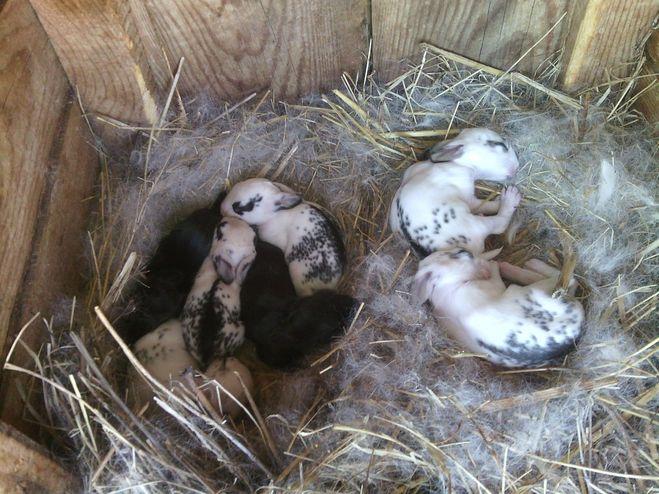 ✅ крольчата: через сколько дней новорожденные открывают глаза и выходят из гнезда - tehnomir32.ru
