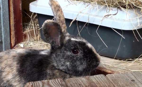 Почему кролик грызёт клетку и как его отучить: во всех подробностях