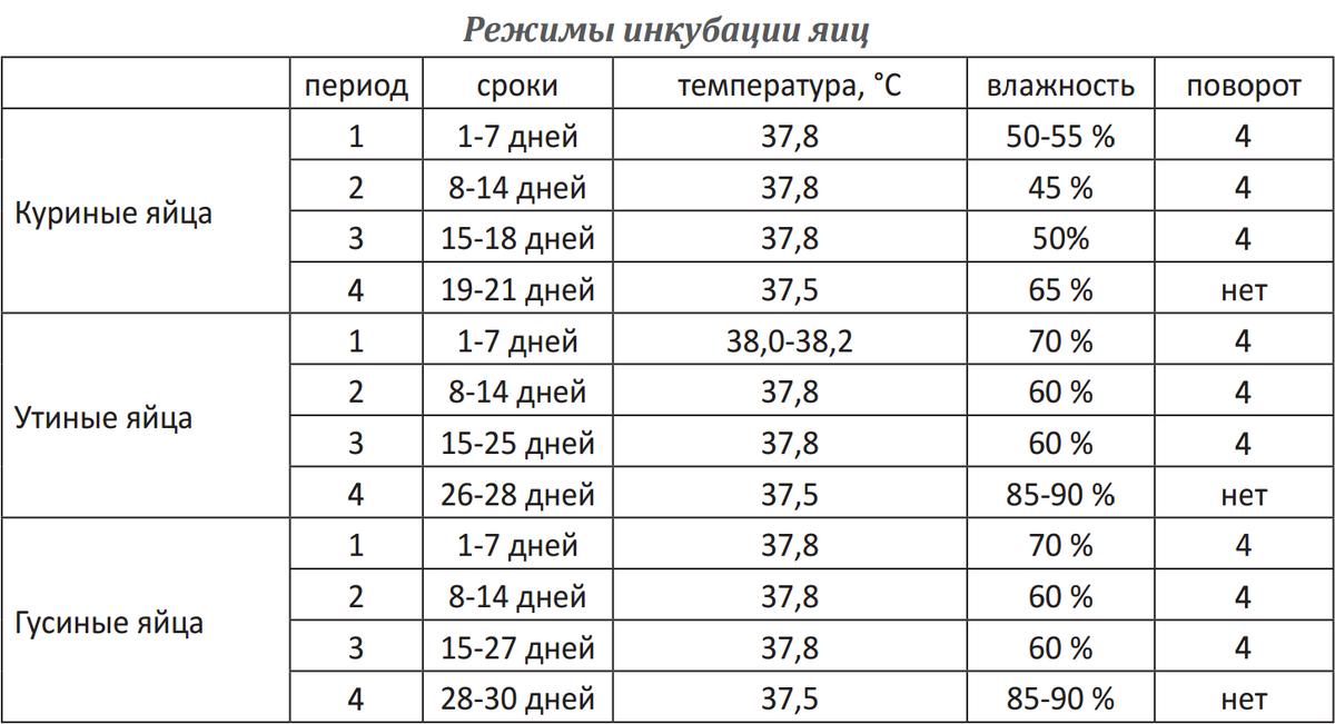 Инкубация куриных яиц в инкубаторе — таблица температуры и влажности