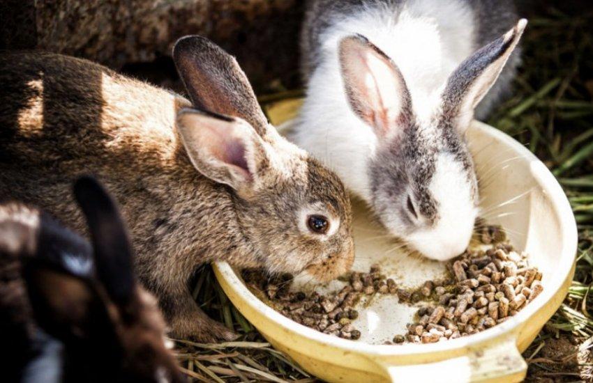 Можно ли кормить кроликов редиской?
