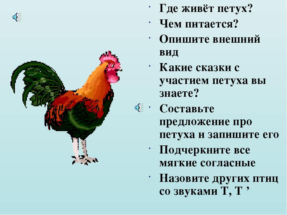 Исследовательский проект «содержание кур и петухов»