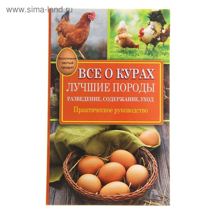 Промышленное птицеводство: основные породы кур и особенности отрасли — cельхозпортал
