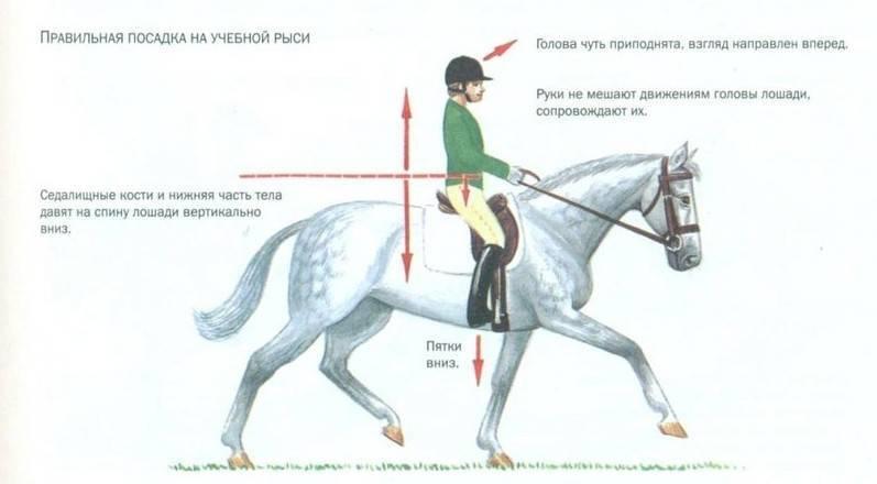 Аллюры: виды лошадиного бега