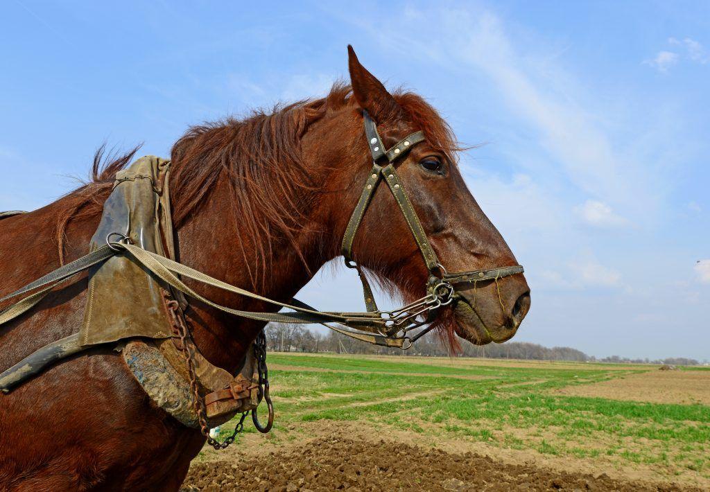 Узда для лошади: как сделать своими руками, фото, строение, как надевать