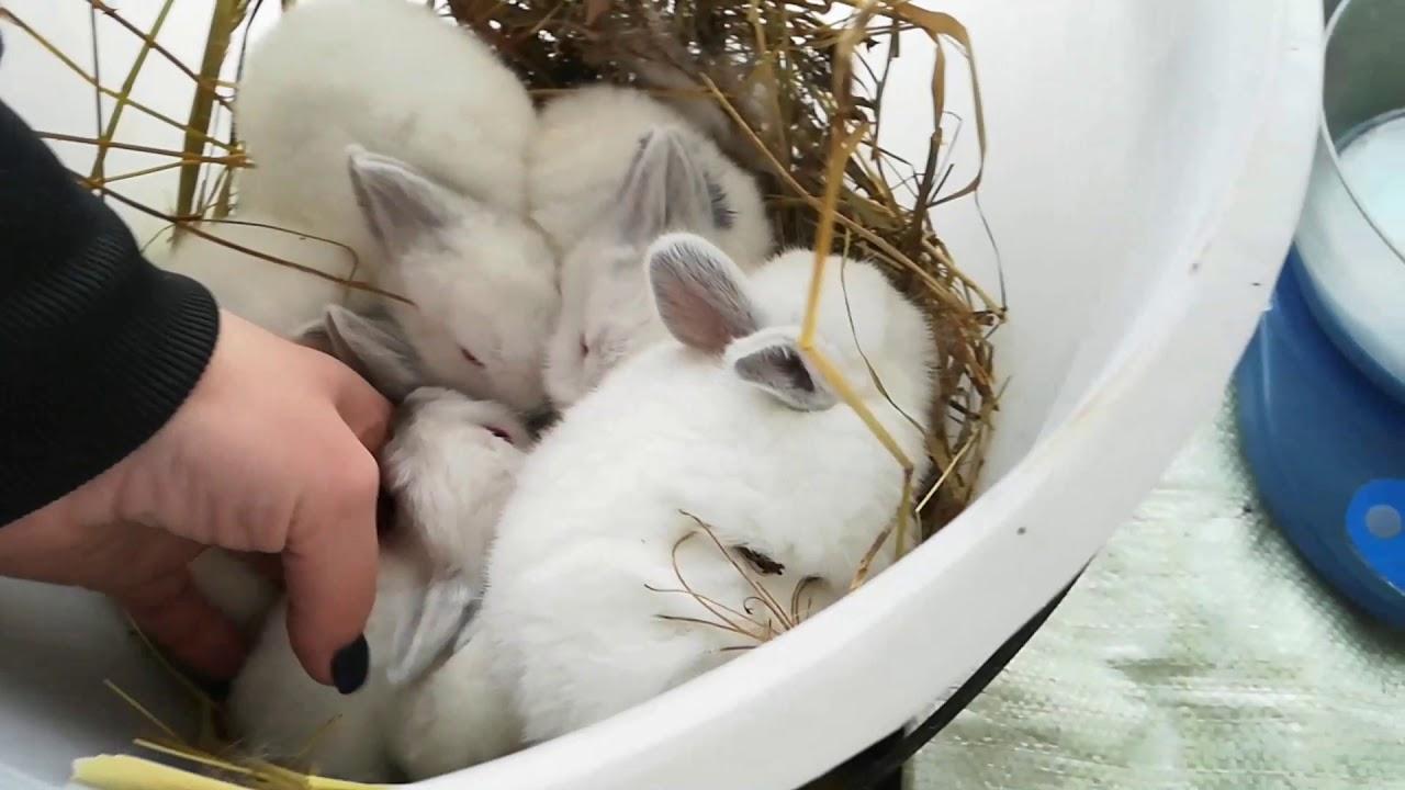 Советы эксперта: как правильно и безопасно брать кролика на руки