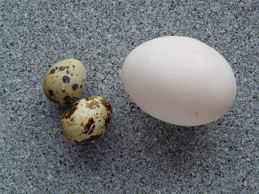 Яйца цесарки — продукт, достойный царского стола