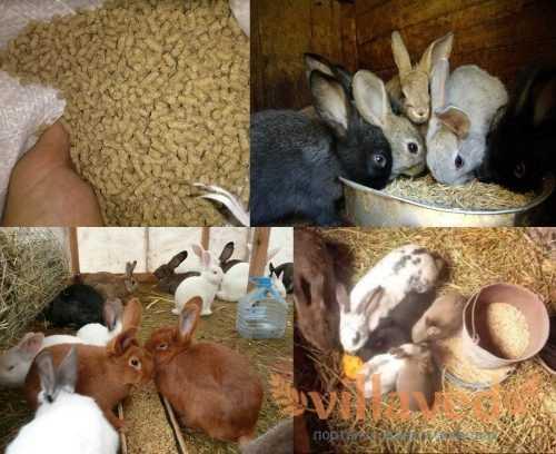 ᐉ чем лучше кормить кроликов для быстрого набора веса? - zooon.ru