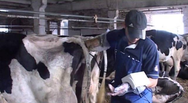 У коровы кровь в кале - дневник фермера ferma-lux.ru