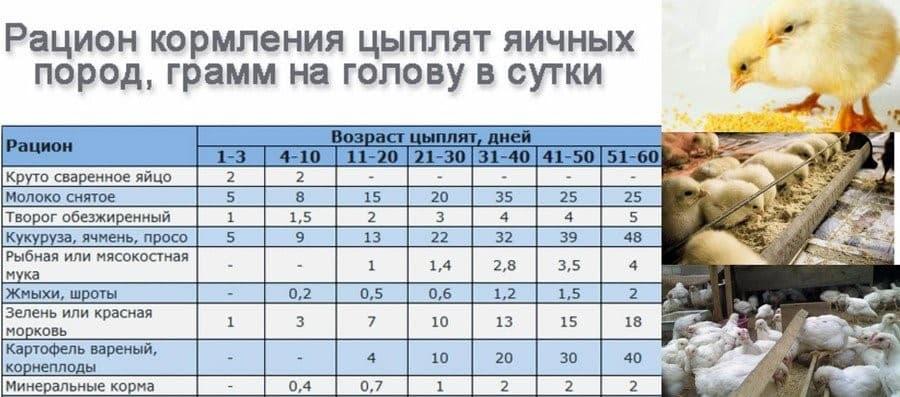 Кормление бройлеров в домашних условиях: таблица расхода корма