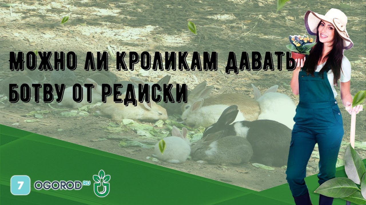 Можно ли кролику давать ботву от редиски и саму редиску и в каком количестве