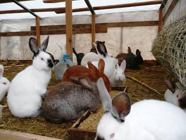 Чем кормить кроликов для набора веса: полезный для здоровья дневной рацион