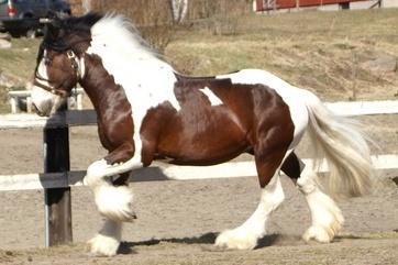 Иппология: что изучает наука, повадки лошади
