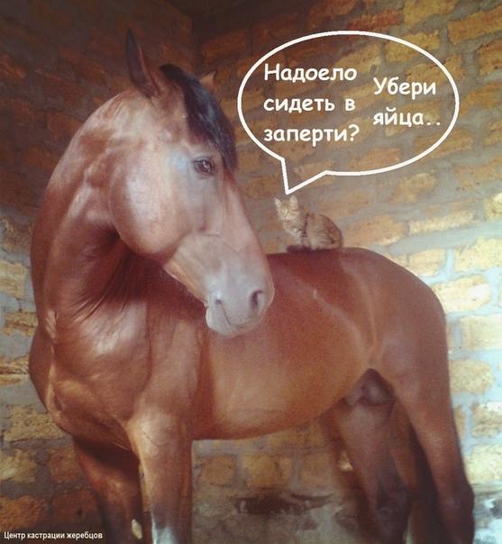 Конь мерин