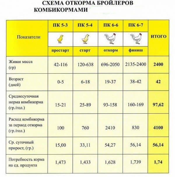 Цыплята бройлеры росс 308: описание породы, фото и отзывы