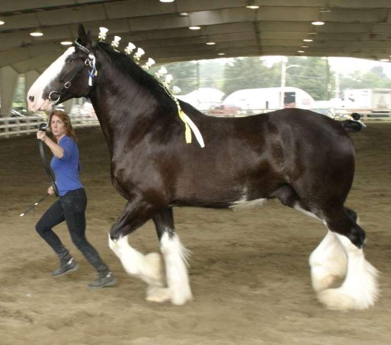 Вес лошади: интересные и невероятные факты