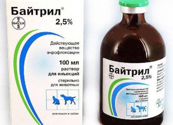 «байкокс»: инструкция по применению препарата для цыплят