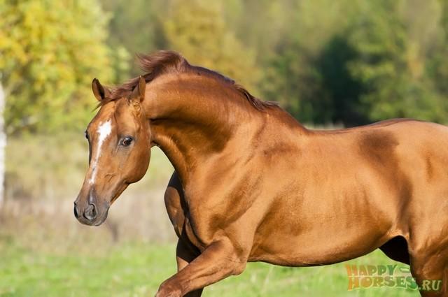 Характеристики донской породы лошадей