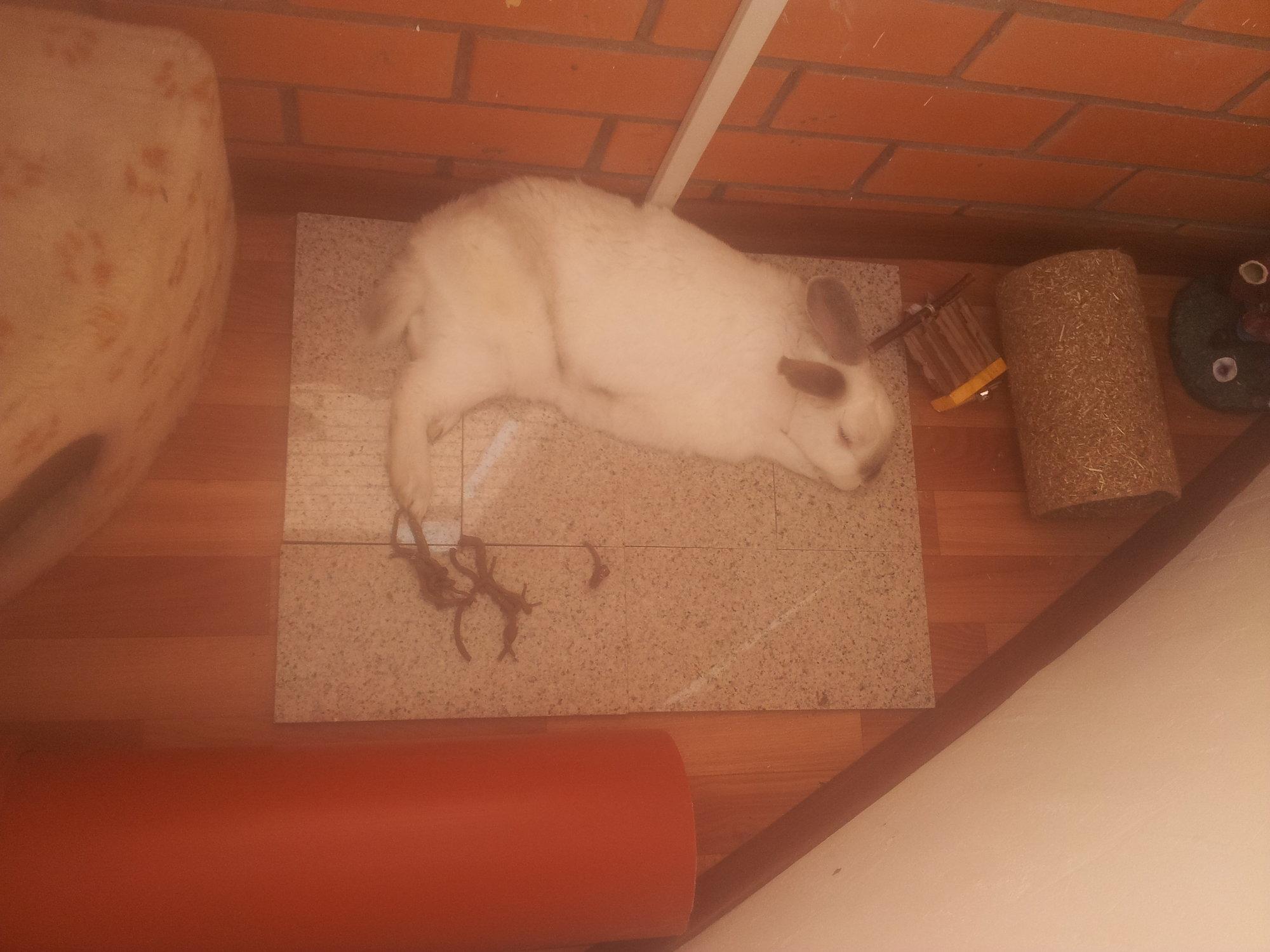 ✅ как спасать кролика от жары: как переносят и могут ли умереть, как охладить - tehnomir32.ru