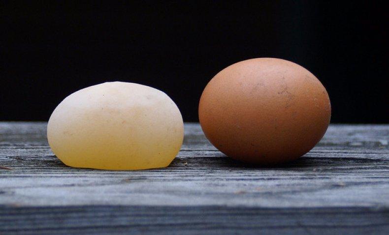 Куриное яйцо без скорлупы в пленке: в чем причина, что делать