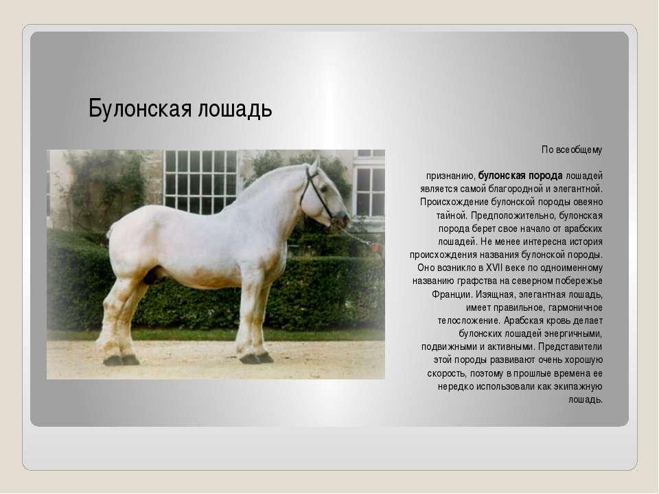 Казахская порода лошадей(адаев и джабе) | мои лошадки
