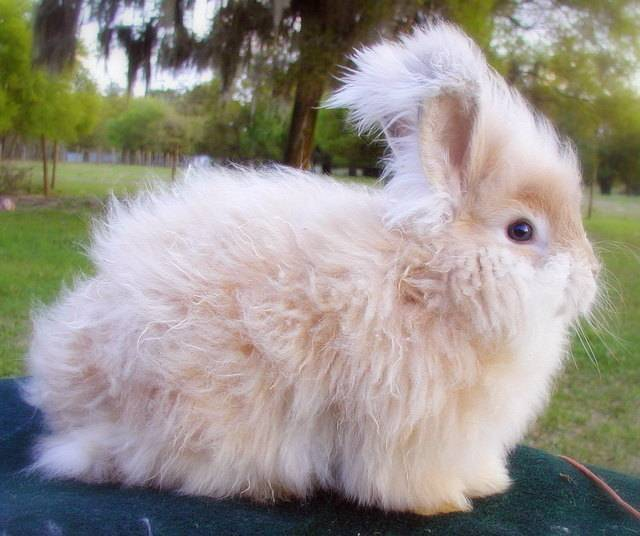 Сколько живут кролики в домашних условиях: декоративные, карликовые, вислоухие и другие