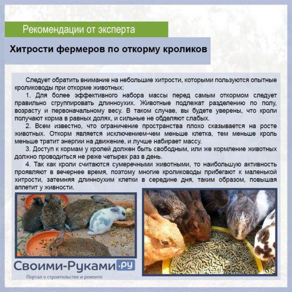 Чем кормить кроликов, чтобы они набирали вес