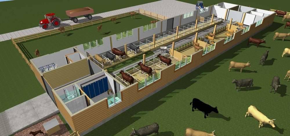 Строительство фермы на 50 дойных коров на привязи - стандартный проект