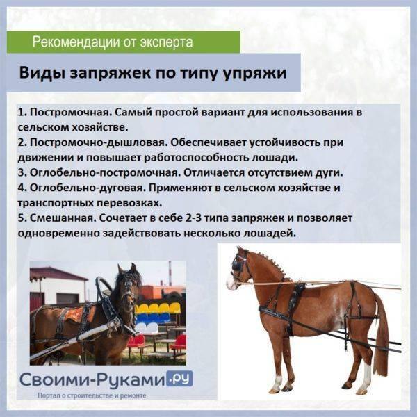 Упряжь и основы запряжки лошадей в телегу