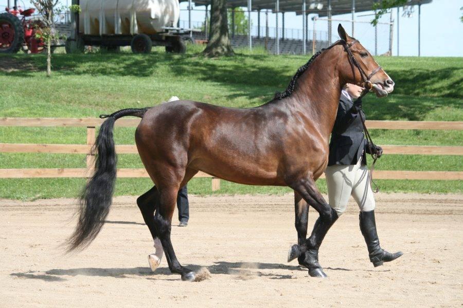 ✅ топ знаменитых коней мира: анилин, абсент, болд рулер, боливар, зеньятта, сухарь - tehnomir32.ru