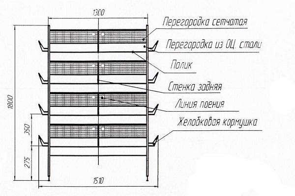 Клетки для бройлеров своими руками: инструкция, фото, видео и чертежи