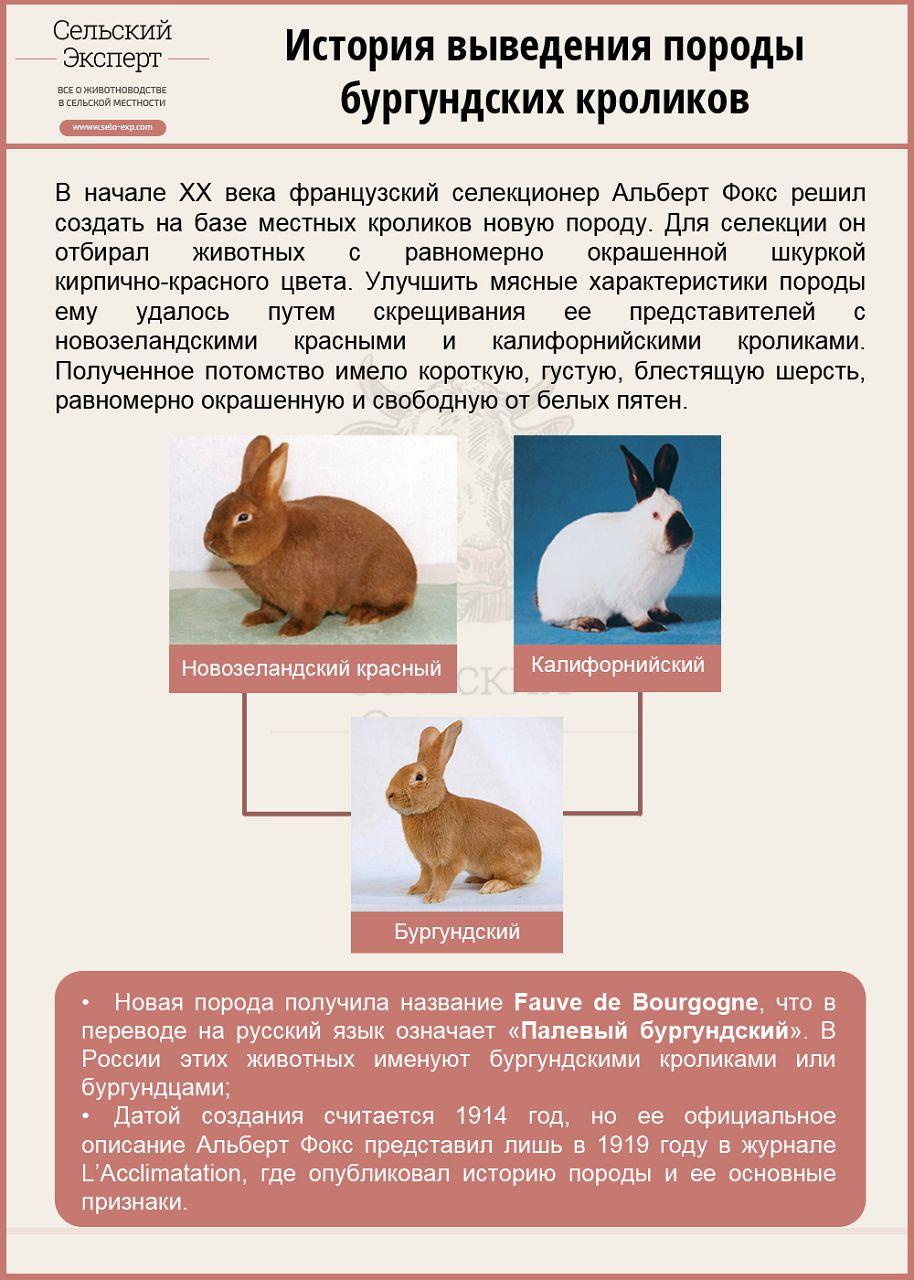 Новозеландские кролики — описание и характеристика породы нзк