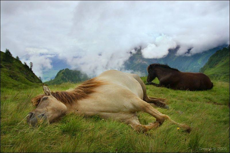 Как спят лошади: стоя или лежа - узнаем все секреты