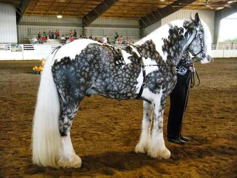 Самые известные породы лошадей. топ-10
