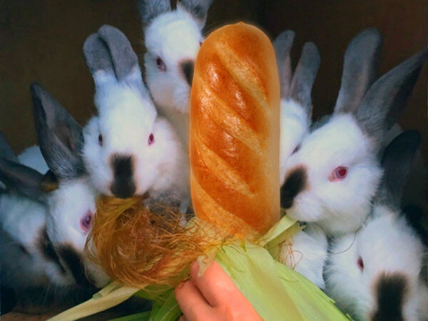 Кормление кроликов хлебом — польза и вред изделий из хлеба, правила и рекомендации по кормлению