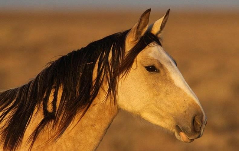 Как объездить лошадь: советы и пошаговая инструкция, особенности техники и приручение лошади (видео + фото)