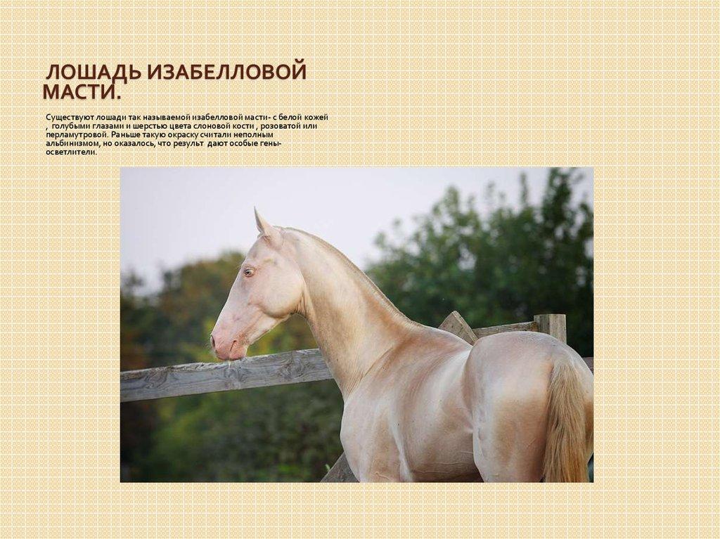 Масти лошадей — описание, фотографии и названия