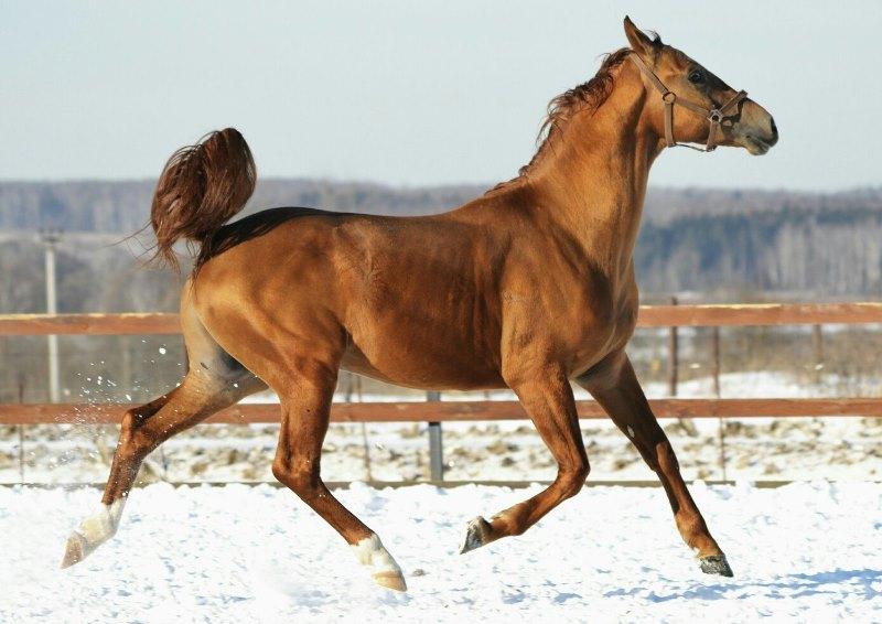 «золото степей» - в россии стартовал проект возрождения донской породы лошадей — agroxxi