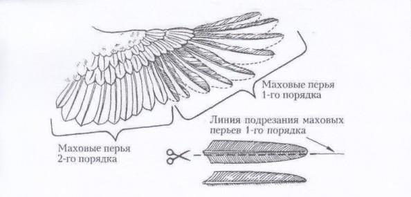 Как обрезать крылья у кур | своими руками – как сделать самому