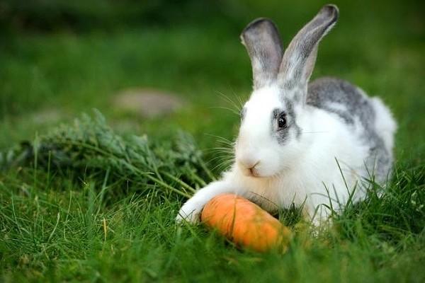 Кролик не ест и не пьет: причины, лечение, советы