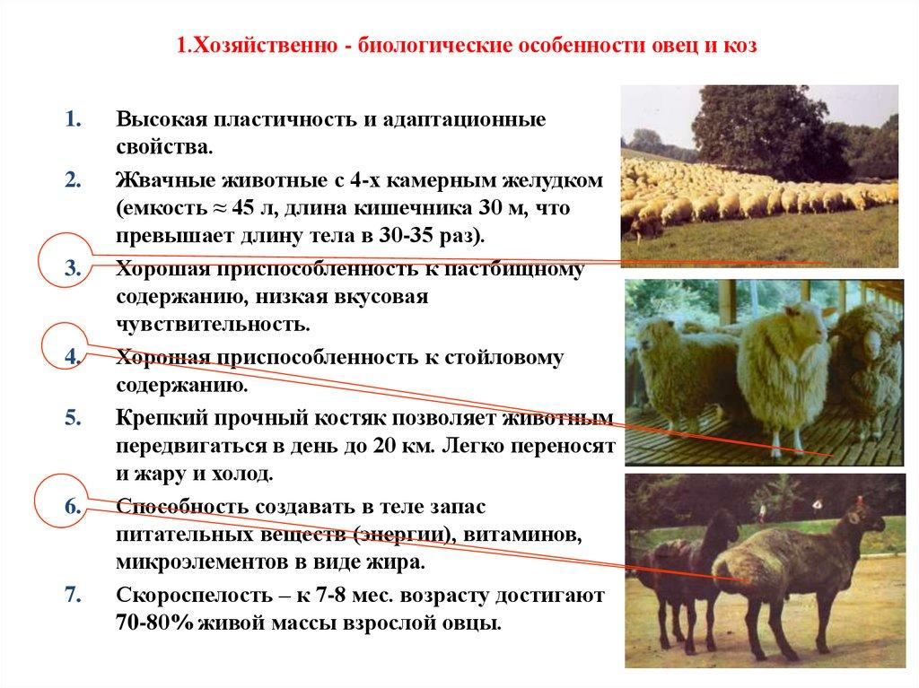 2 происхождение, биологические особенности, конституция и экстерьер крупного рогатого скота