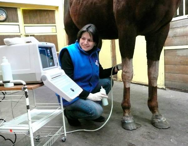 Болезни лошадей: классификация, симптомы и лечение