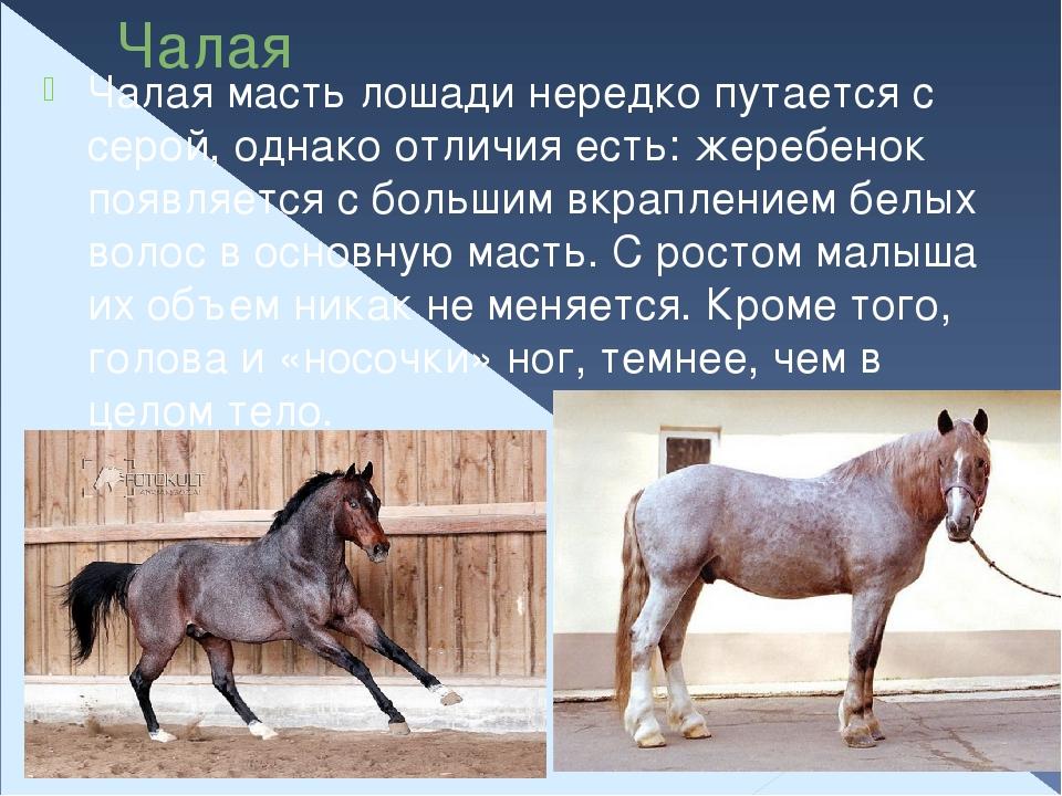 Игреневая масть лошади — описание и фото масти | мои лошадки