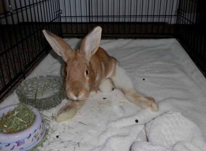 ✅ почему у кролика отказали лапы (задние, передние): причины, симптомы, что делать и как лечить - tehnoyug.com