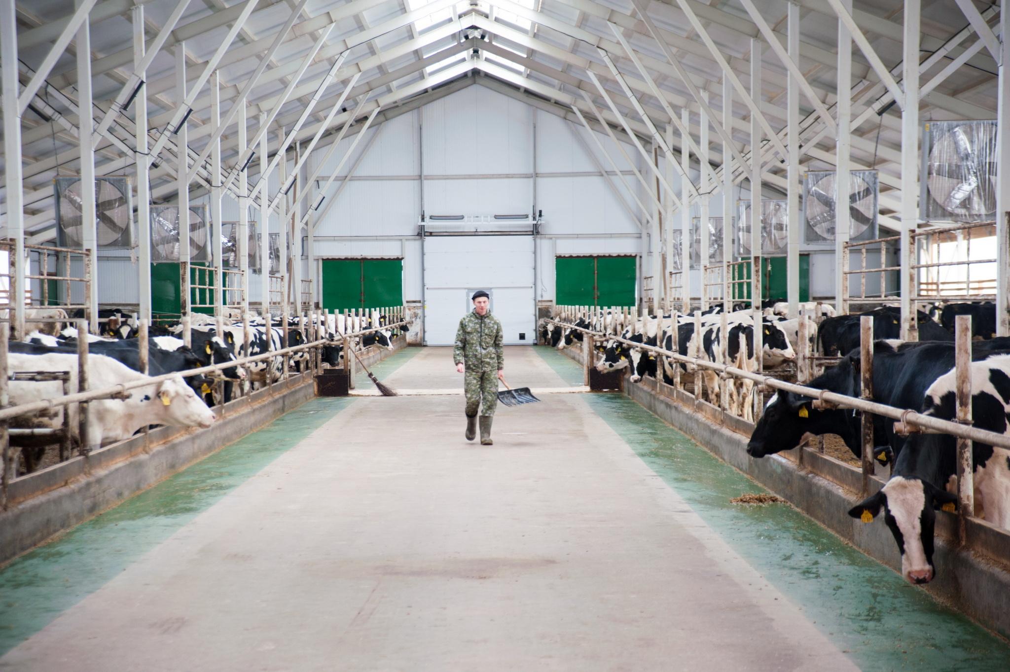 Проект строительства фермы на 200 голов крс