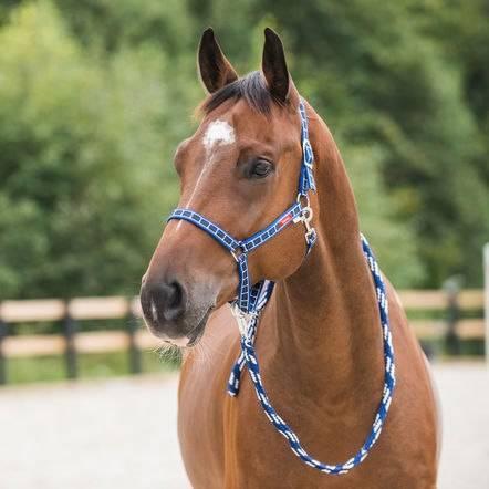 Амуниция для лошадей: в снаряжение для коня входят ошейник, хомут, стремена, ногавки || конская амуниция