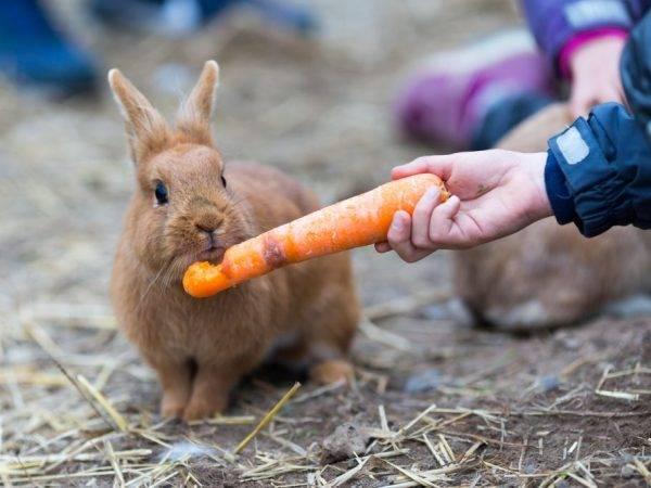 Можно ли кроликам давать горох, его стручки и ботву
