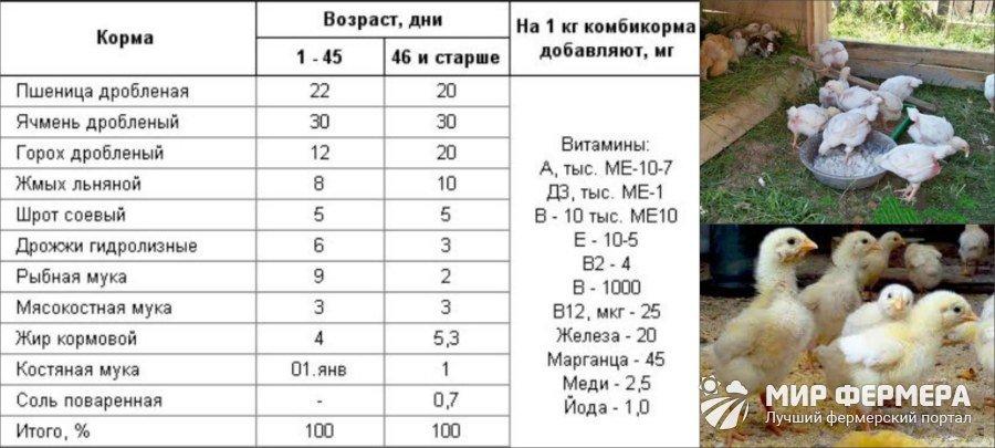 Особенности выращивания индюшат